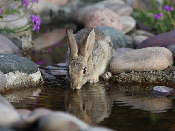 Как да храним зайци и как да го направим