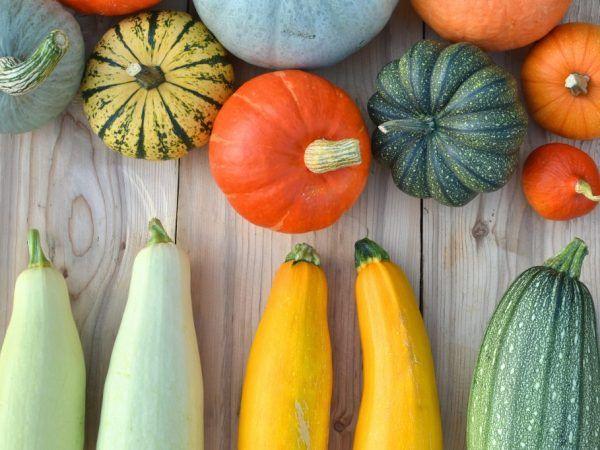 Тиквите и тиквичките имат подобни изисквания за съхранение на плодове