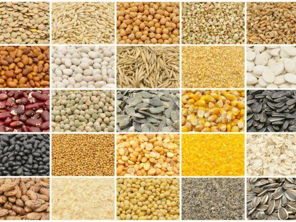 Благодарение на храненето със зърнени култури патиците бързо наддават на тегло и растат. Зърното е лесно смилаемо и се харесва както от млади, така и от възрастни птици.