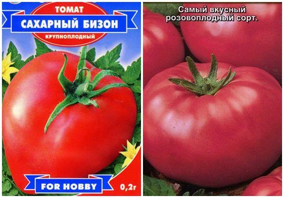 Характеристика та опис сорту томату цукровий бізон або вождь червоношкірих, його врожайність