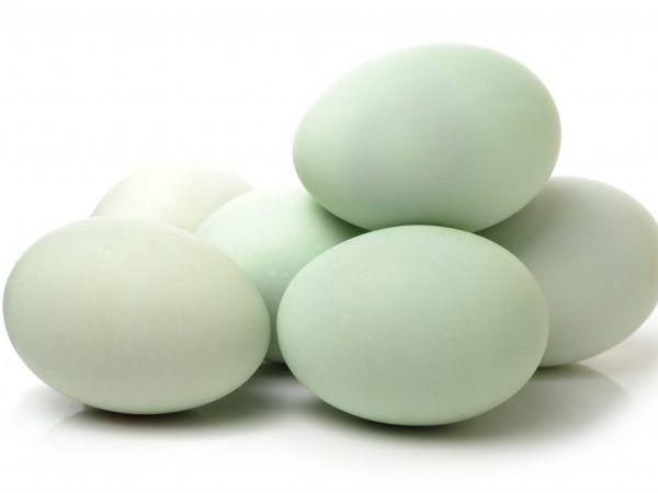 По-добре е да събирате яйца за инкубатор през пролетта