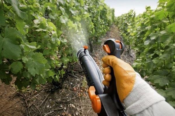 обприскувати виноград