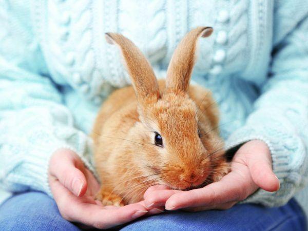 Интересни факти за домашните зайци