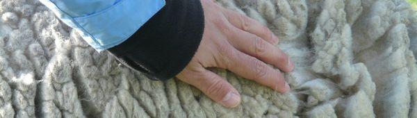 Продукти от овча вълна: технология, методи на производство, полезни свойства