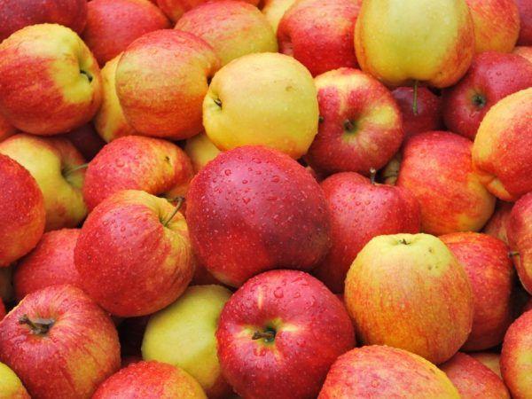 Пинова ябълково дърво - особености на отглеждане