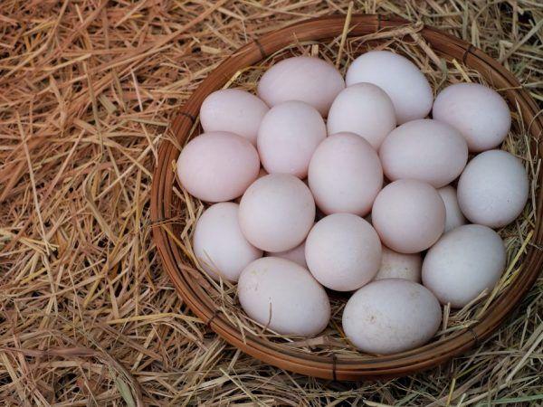 Яйця індоуткі містять елементи, корисні для людського організму: вітаміни, кальцій і фосфор і т.д.