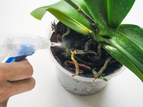 Захарна киселина - вълшебна превръзка за орхидеи