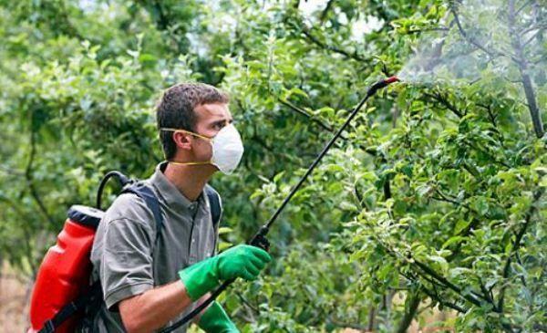 Spracovanie jabloní chemickými a biologickými látkami