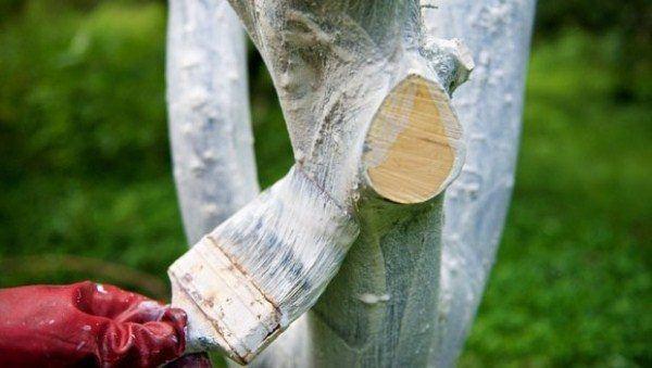 Stromy musia byť bielené na jar a na jeseň