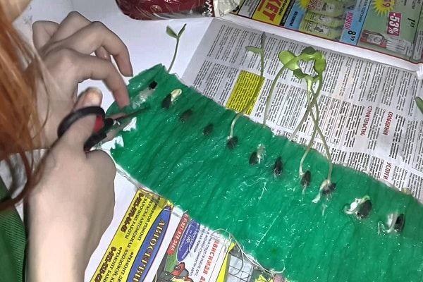 рязане на полиетилен