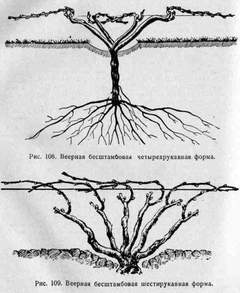 віялова формування