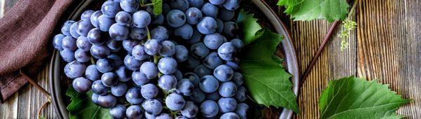 Как да направите пергола за грозде със собствените си ръце