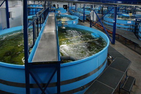 Как да отглеждаме риба в басейна?