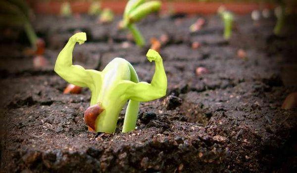Кога да засадите семена за разсад от зеленчуци