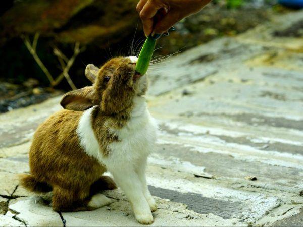 Хранят ли се зайци