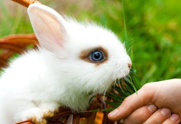 Хранене на малки зайци