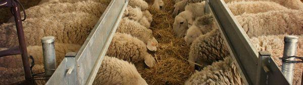 Хранилници, купи за пиене, разсадници за овце - независимо производство