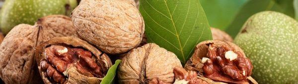 Лечение на рак на ореха