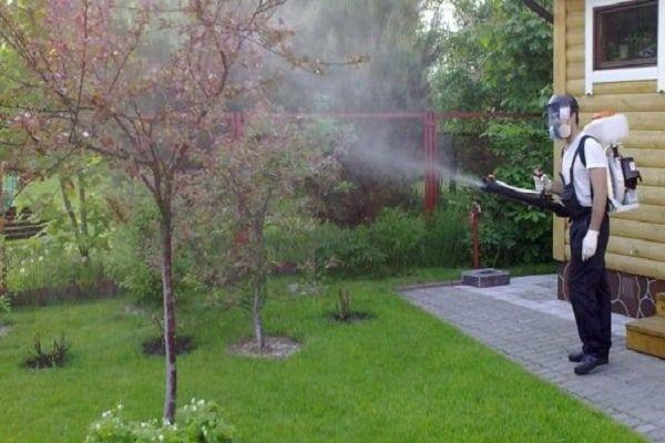 spracovanie stromov