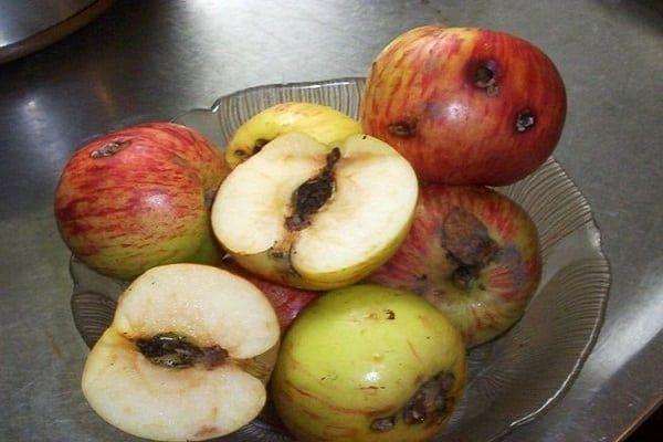červivé jablká