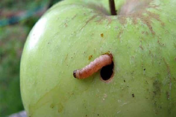 jabĺk