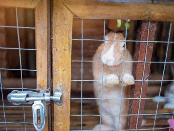 Преглед на индустриални клетки за зайци