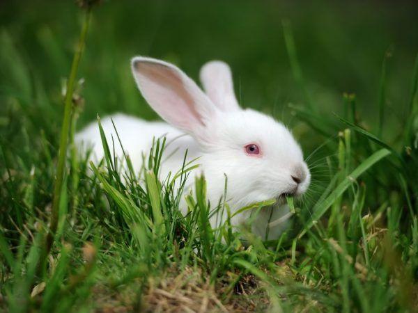 Описание на зайци hikol