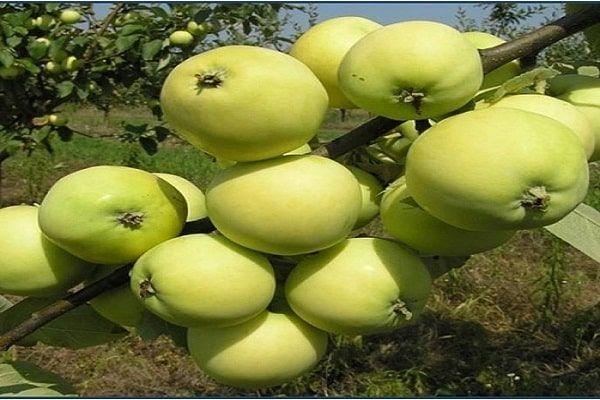 обприскувати яблуню