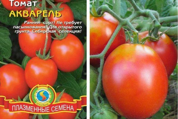 Описание на сортовете доматен акварел и неговите характеристики