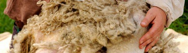 Характеристики на ръчното подстригване на овце: общи правила за избор на ножица