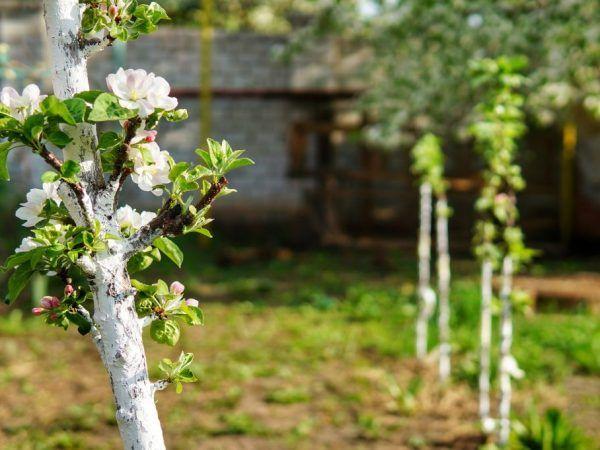 Молодим деревам потрібен регулярний полив