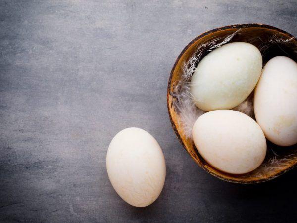 Caracteristicile ouălor de rață