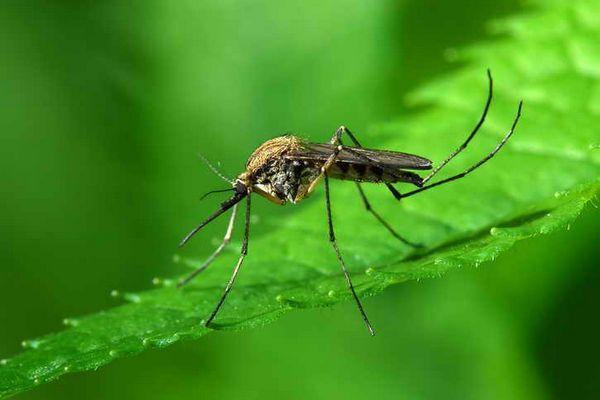 Няма спасение от комарите? Давам доказана рецепта