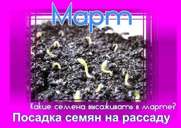 Засаждане на семена за разсад през март според лунния календар