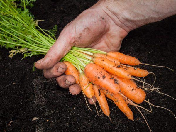 Лунният календар ще ви помогне да изберете най-доброто време за прибиране на реколтата