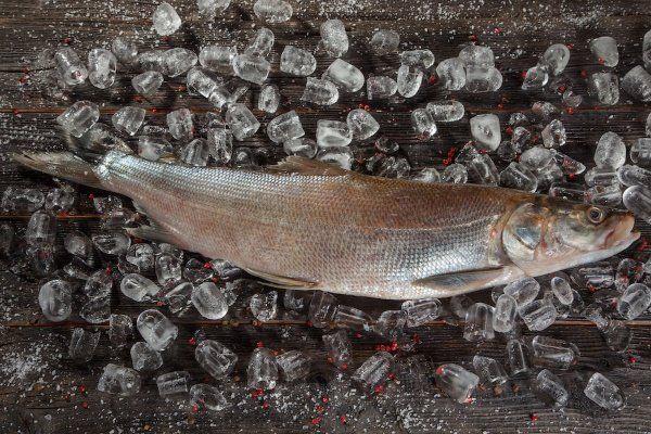 Риба nelma: подробно описание и методи за риболов