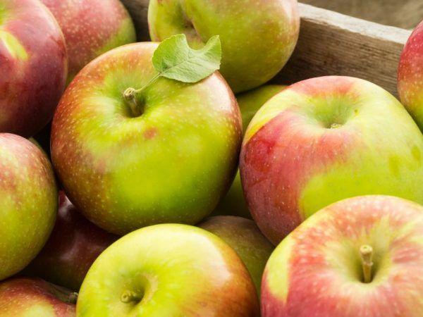 Най-голямата ябълка в света - колко тежи