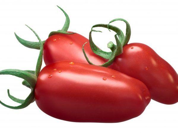 Степен на домат изгорял