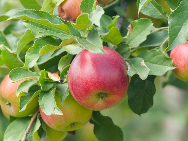 Список вітамінів в яблуках