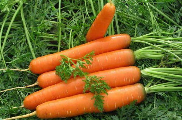 Начинът за засаждане на моркови - зашеметяващи резултати