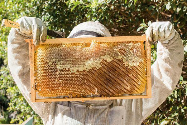Термін придатності меду