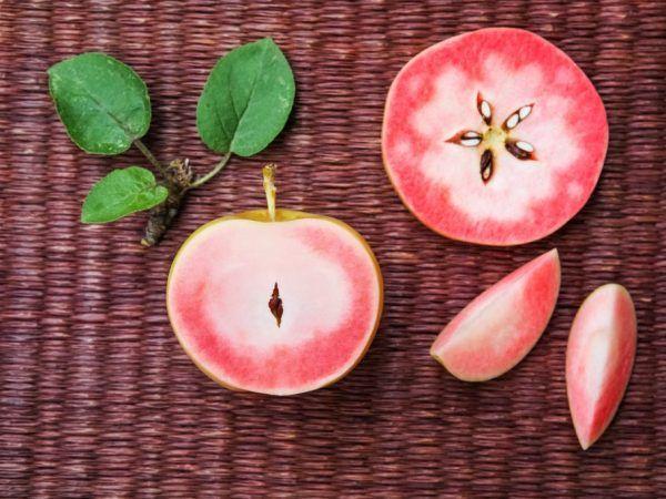 Сушені яблука і їх вплив на організм