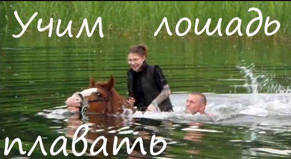 Môžu kone plávať?