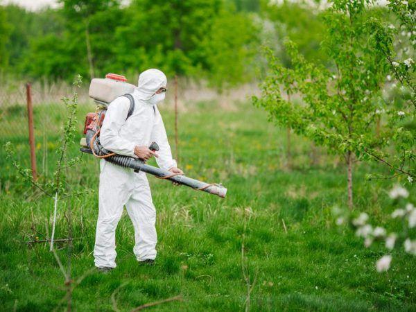 Spracovanie chráni strom pred chorobami