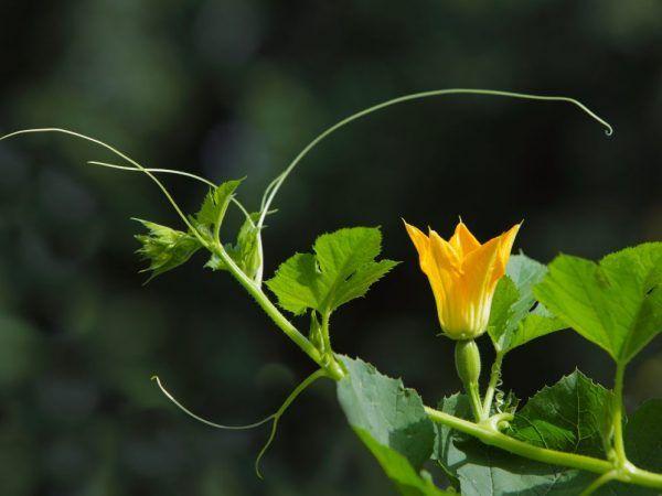 Sănătatea plantelor depinde de calitatea îngrijirii