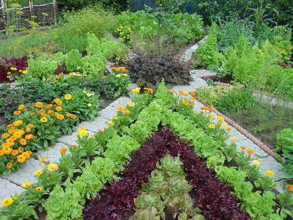 Защитете градината от вредители - селски тайни